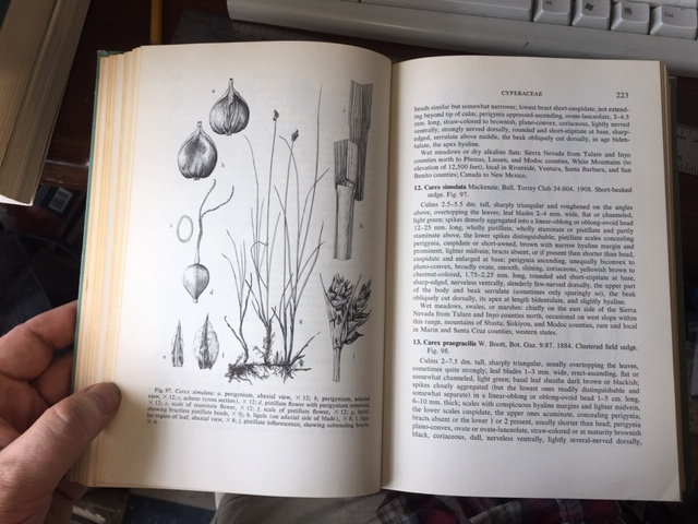 Image for A Flora of the Marshes of California.  First Edition